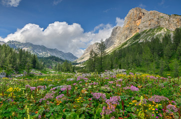 Flowers in the mountain meadow in Julian Alps