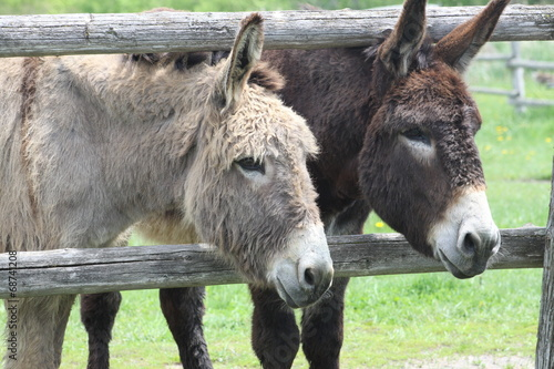 Plexiglas Ezel Donkey's (Brown & Gray)