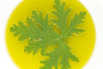 Citronella Plant Mosquito Repellant