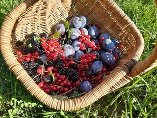 Beeren und Pflaumen aus dem Garten