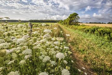 Wildflower Road
