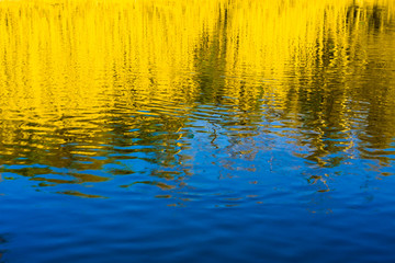 reflected in water