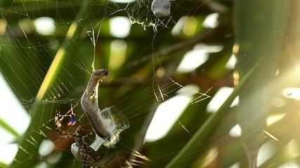 ragno cattura preda