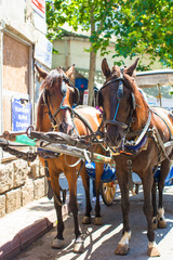 Traditional carriage with horses on the island of Buyukada,