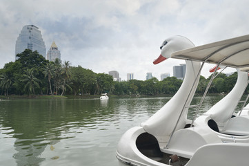 Swan Pedal boat in the pond