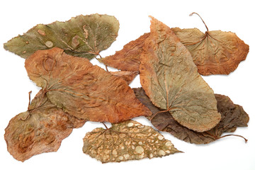 set of texture of dry leaves