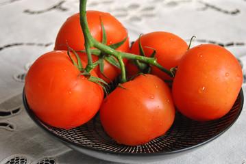 verse tros tomaten
