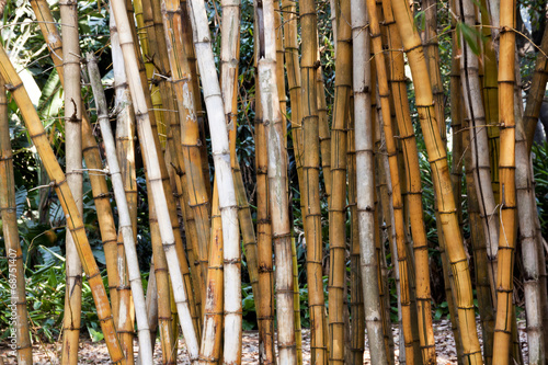 zblizenie-na-suche-bambusowe-galezie