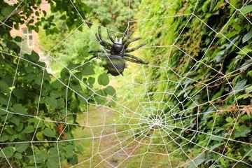 Riesige Plastikspinne in einem künstlichen Spinnennetz
