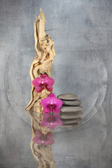 Wurzelholz mit Orchideen