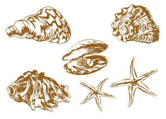 Set of hand drawn sea shells. Vector illustration