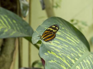 Schmetterling auf Blatt
