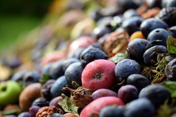 Komposthaufen - Äpfel und Pflaumen