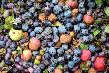 Komposthaufen - Obst