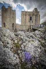 Torre e fiori fra le rocce