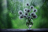 dandelions in white vase on the window