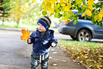 little boy with autumn maple leaves