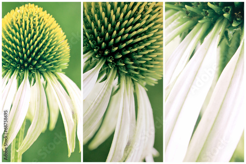 canvas print picture Green coneflower collage
