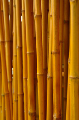 row of bamboo canes