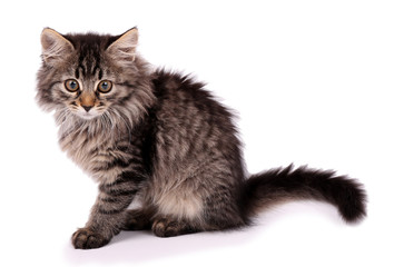 Beautiful kitten isolated on white