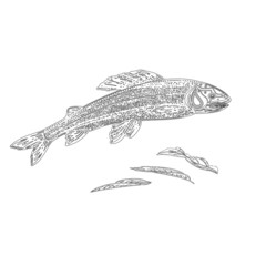 Trout as vintage engraved black vector