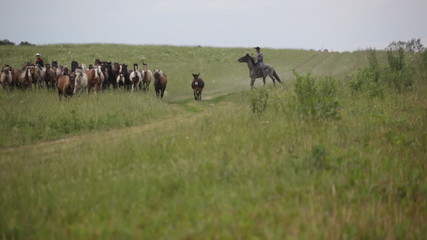 Two cowboys drive herd of horses across the field