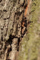 Anthill on a tree trunk close up