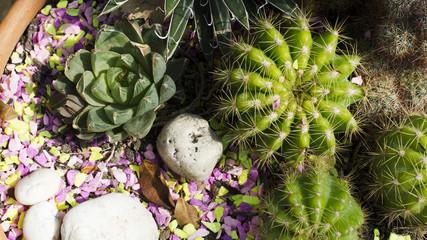 Cactus in pot closeup background stock photo