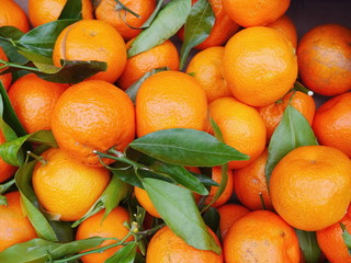 organic oranges with leaves