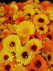 gerberas orange yellow