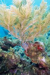 Sea plumes