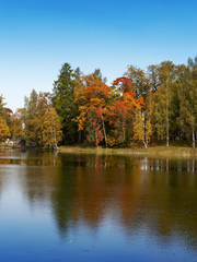 Autumn tree with bright foliage is reflected in the lake..