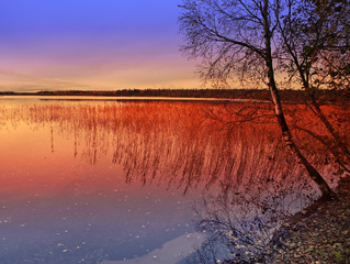 Evening, autumn. Cane in the blue lake