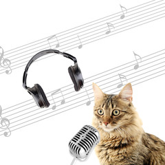 Beautiful cat with headphones, microphone and notes