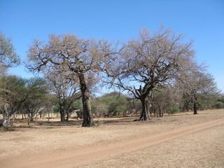 Springtime in African Bushveld