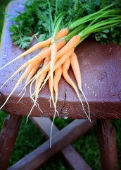 Bundle of carrots on a bench