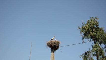 Stork bird family in nest on electricity pole on blue sky