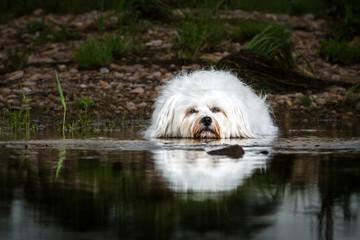 Hund liegt im Wasser