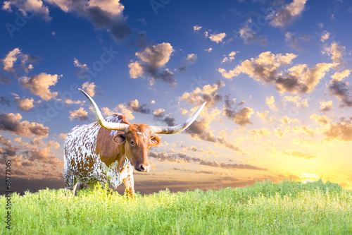 Foto op Canvas Koe Longhorn Cow