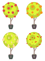 Different Fruits in a Trees