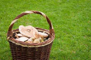 Wicker basket with mushrooms on the lawn