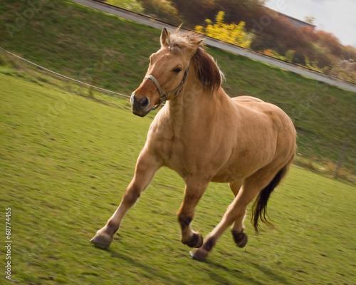canvas print picture Pferd