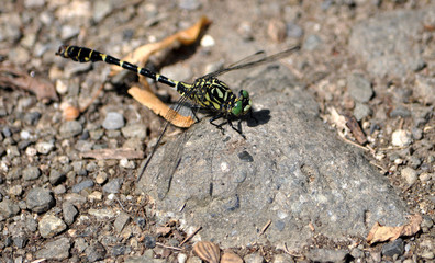 dragonfly on stone