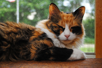 Sleepy Kitty on a Sunny Window Sill