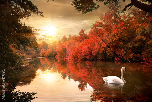 Foto op Aluminium Rivier Swan in the autmn