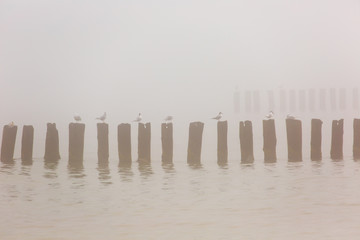 Wooden groynes at the beach of Baltic sea, Poland.