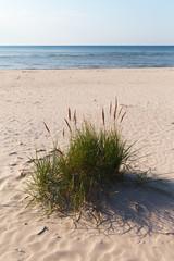 Grass on beach.