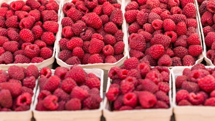 Red raspberries in boxes at local farm market in Poland.