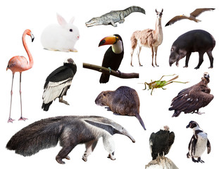 Set of  anteater and other animals of South America
