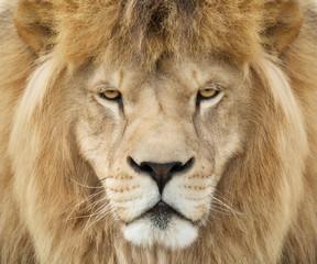 Solemn king